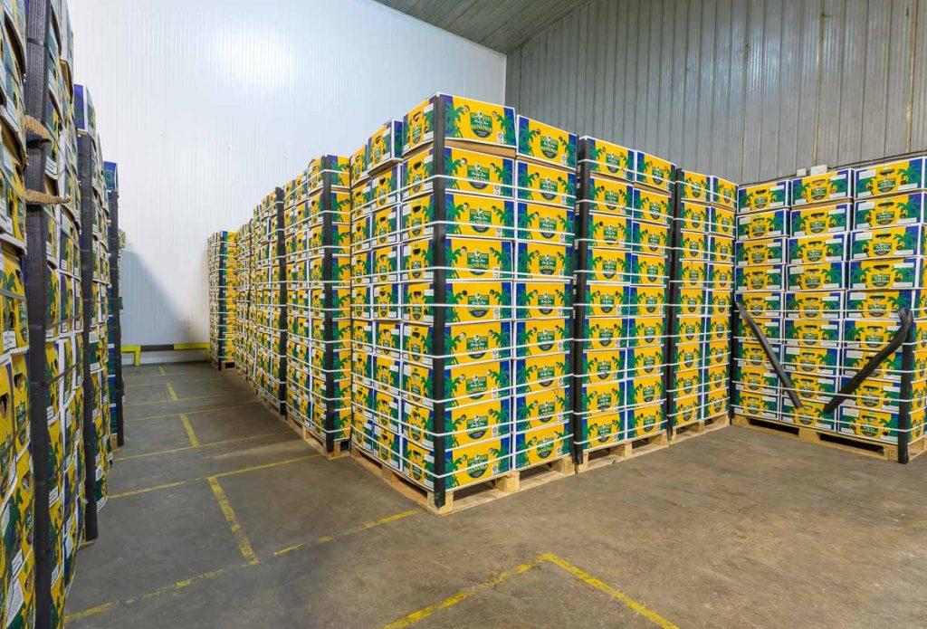 палета с банани в склад от заснемане на складови помещения