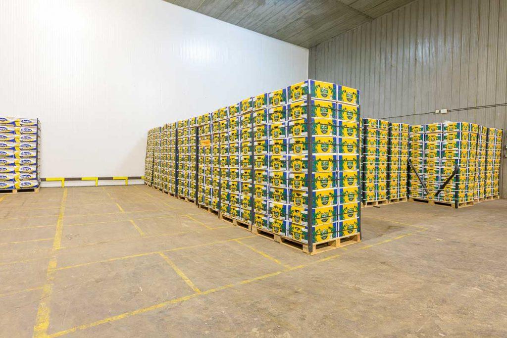 складово помещение с кашони с банани от заснемане на борса софия
